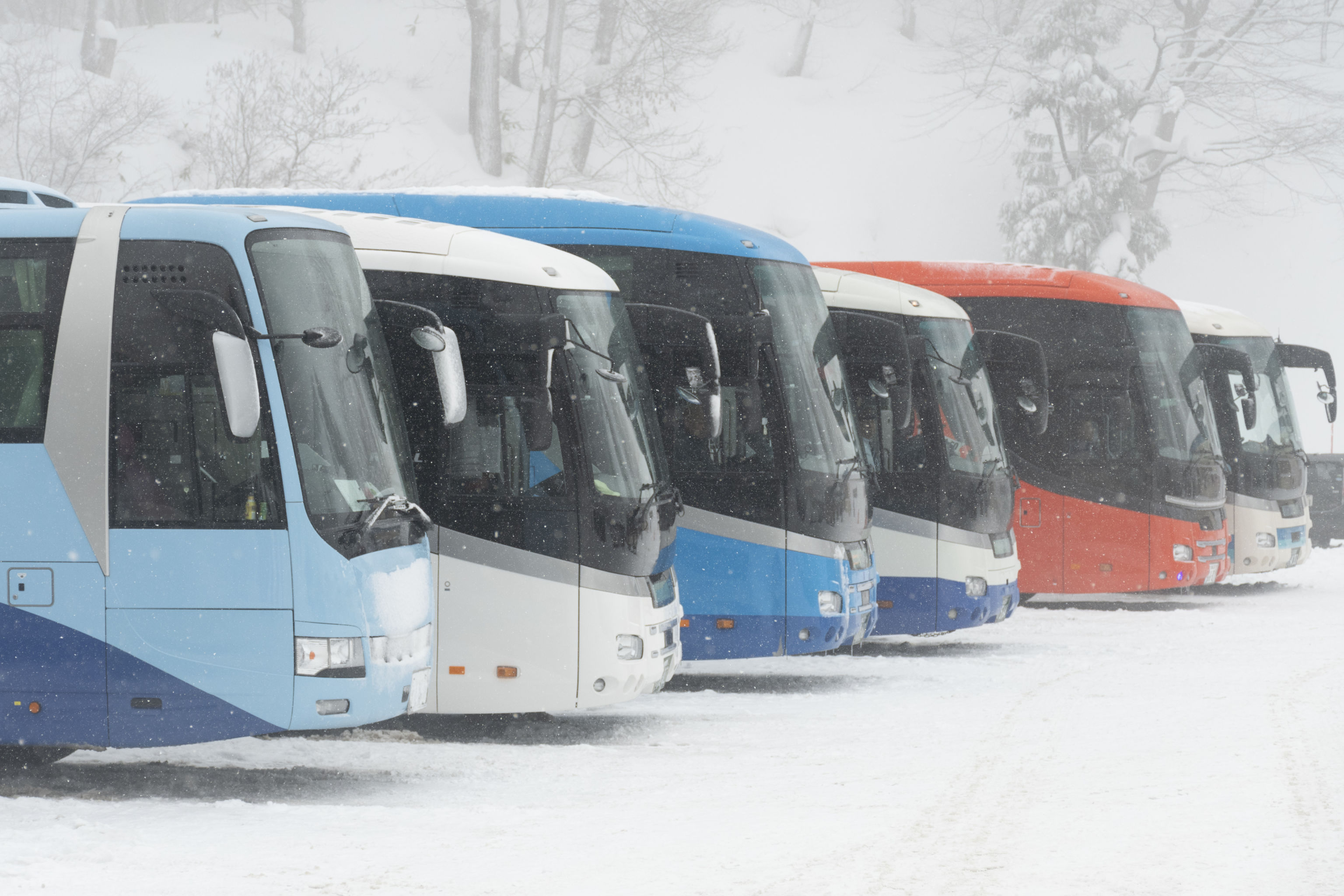 several buses lined up in winter